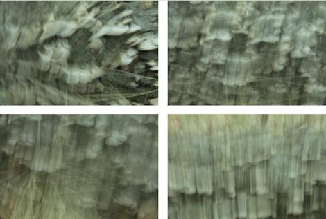 Fungi Kinesthetic Imaging Arrangment.jpg